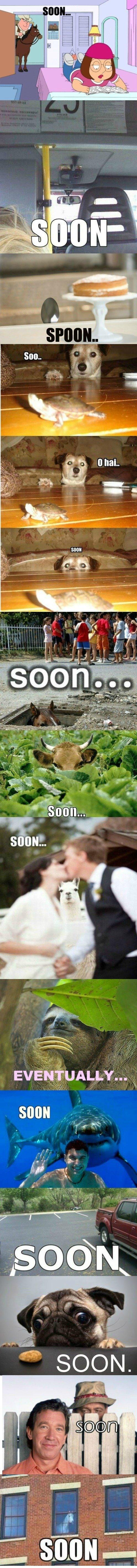 wtf regular omg! meme lulz lul LOL LOLWUT Lolz humor FUNNY haha ftgdw EPIC comic comedy blog Awesome all soon comp compilation soon... family guy spoon dog turtle horse cow llama sloth eventually shark car truck pug