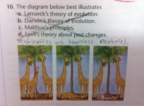 funny kids homework giraffes