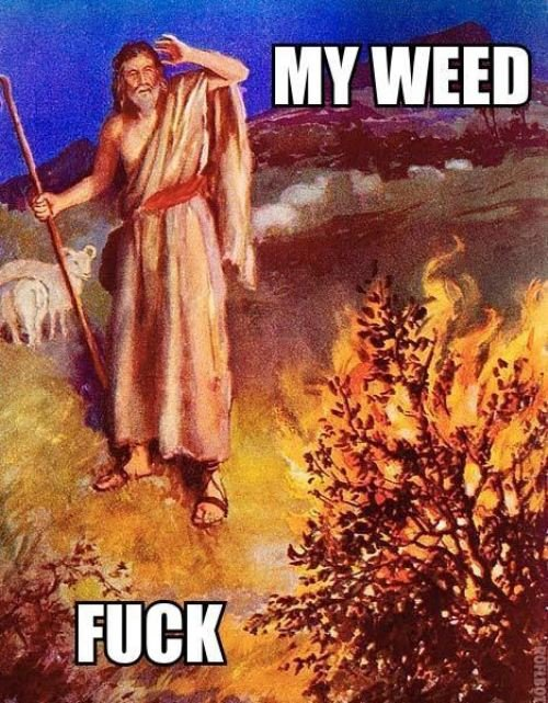 Moses burning bush my weed fuck