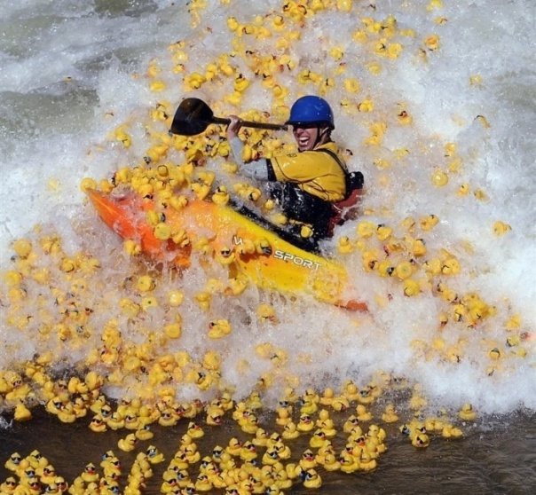kayaker and suddenly there were rubber ducks